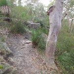 Track above Lane Cove River (63959)