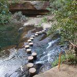 Berowra creek Stepping stones (64655)