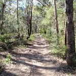 Great North Walk bushtrack (66252)