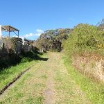 Continuing The Great North Walk near Waratah Avenue (66414)