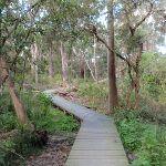 Boardwalk winding along Flaggy creek (66516)