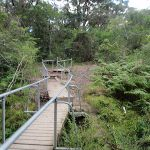 Great North Walk bushtrack (66591)