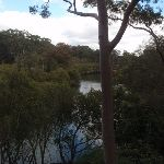 View of Lane Cove river (67251)