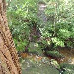 crossing a small creek (67755)
