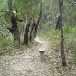 Track to Berowra Waters (6865)