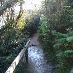 Manly Scenic Walkway (70279)