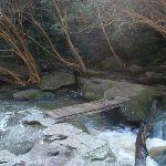 Fishponds Bridge (70831)