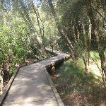 Crosslands boardwalk (71329)