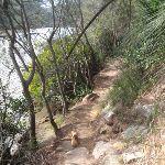 following berowra creek (71389)