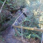 Mt Kuring Gai link track (71827)