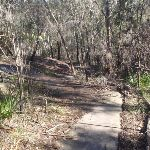 Path down from Berowra (71962)