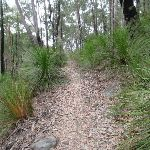 Florabella Track (73287)