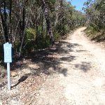 Track marker on The Oaks Fire Trail (74580)
