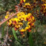 Flowers on St Helena spur (74688)