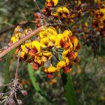 Flowers on St Helena spur (74688)