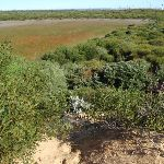 great example of a hanging swamp lining the cape bailey walk (75534)