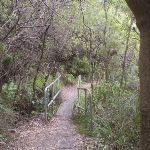 Overcliff Walk (7757)