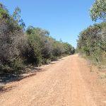 Bobbin Head track (78538)