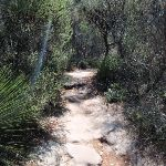 Manly to Spit trail (78820)