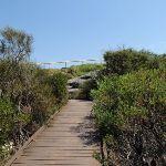 Boardwalked Track (78838)