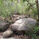 Track over rocks (79489)
