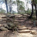 Track to Pennant Hills Park (79546)