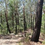 Once burnt bush (79558)