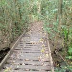 Footbridge over creek (80113)
