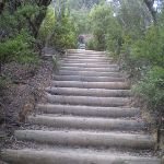 Stairs up to Wentworth Falls Lookout (8084)
