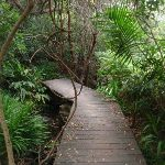 Manly Scenic Walkway boardwalk (82390)