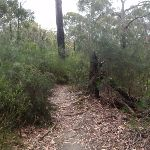 Track nearing Pennant Hills Park (82741)