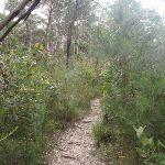 Track below Mambara Track (82750)