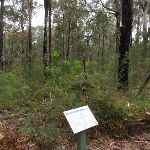 Sign interpreting the bush on the Mambara Track (82780)