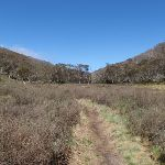 Walking along the Thredbo River track (83590)
