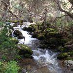 Crossing the creek near the Wier (84595)