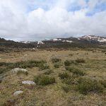 Track east of Foremans hut ruins (85681)