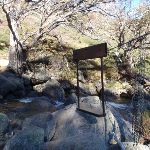 The old flying fox on Blue Cow Creek (88570)