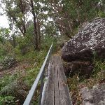 Crossing a short wooden walkway (89937)