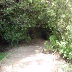 Prince Henry Cliff walk near Katoomba Cascades (92239)