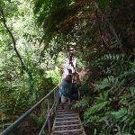 Stair case bellow Lila Falls (93094)