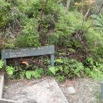 Int of Prince Henry Cliff Walk and Leura Forest Track (93325)