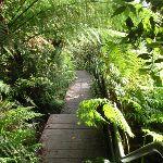Leura Creek Walkway (93793)