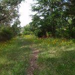Track near Cliff Drive (93871)
