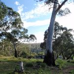 Thredbo River Picnic Area (95719)