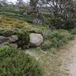 Diverse scenery on the Summit Walk (96208)