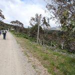 Walks on Summit track (96682)