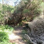 Track leading through the bush (98864)